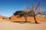 Dunes of Namib Desert, Sossufley, Namibia Photographic Print by  DmitryP
