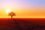 Dry Tree Silhouette Photographic Print by  lekcej