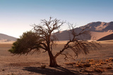 Landscape in Namibia Photographic Print by  schoolgirl