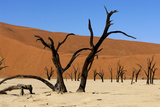 A Sand Dune in the Desert, Namibia, Africa Photographic Print by  Apollofoto