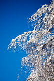 Winter Photographic Print by  Molka