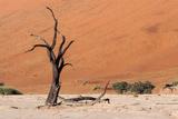 Sossusvlei, Namibia Photographic Print by Ivana Tacikova