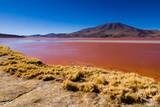 Laguna Colorada Photographic Print by Andras Jancsik