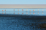 Line of Flamingos with Reflections Photographic Print by Photography by Jessie Reeder