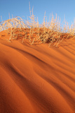 Sand Dunes Photographic Print by pink candy