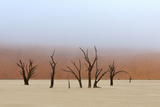 Tree Skeletons, Deadvlei, Namibia Photographic Print by Grobler du Preez