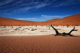 Namibia Desert Photographic Print by MJO Photo