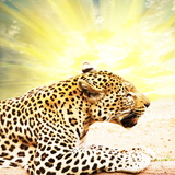 Leopard Photographic Print by Andrushko Galyna