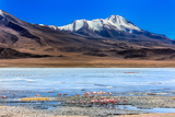 Flamingoes in Laguna Verde ,Bolivia Photographic Print by  nok3709001