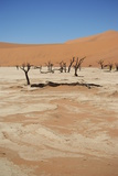 Dead Vlei at Namib Desert Photographic Print by  Twentytwo