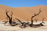 Dead Vlei Namibia Fotografisk tryk af  Twentytwo
