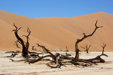 Dead Vlei Namibia Photographic Print by  Twentytwo
