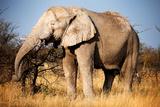Elephant Photo by MJO Photo