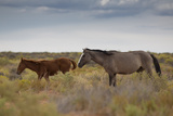 Wild Horses in Utah Photographic Print by  watchtheworld