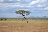African Landscape Photographic Print by  meunierd