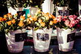 Colorful Flowers in A Flower Shop on A Market Photographic Print by Curioso Travel Photography