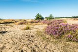 Colorful Dune Landscape Photographic Print by Ruud Morijn