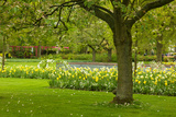 Spring Lawn in Garden Photographic Print by  neirfy