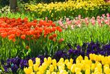 Colette2 - Tulips, Hyacinths and Daffodils - Fotografik Baskı