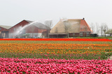 Spraying the Tulip Crop Photographic Print by  tpzijl