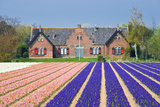 House with View on Hyacinthfields Photographic Print by  Colette2