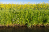 Yellow Blooming Rape Plants at the Edge of A Ditch Photographic Print by Ruud Morijn