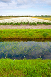 Irrigation Canal Photographic Print by  gkuna