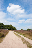 Landscape with Sand Path Purple Heath Fields in Summer Photographic Print by  Ivonnewierink
