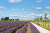Lavender Fields in Holland Photographic Print by  Ivonnewierink