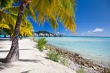 Beautiful Beach on Bora Bora Island in French Polynesia Photographic Print by BlueOrange Studio