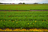 Dutch Fields Photographic Print by  gkuna