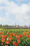 Small Village Den Hoorn with White Church at Dutch Wadden Island Texel Photographic Print by  Ivonnewierink