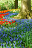 Colorful Springflowers in Dutch Spring Garden 'Keukenhof' in Holland Photographic Print by  dzain