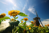 Dutch Windmill Photographic Print by  hongwicha