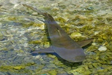 Sharks Photographic Print by  Styve