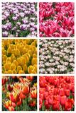 Tulip Collage Photographic Print by  SNEHITDESIGN