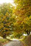 Country Lane and Autumn Foliage Photographic Print by John P Kelly