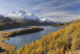 Lake Sils with Trees in Autumn, Piz Da La Margna, St Moritz, Maloja District, Engadin, Graubunden, Photographic Print by Martin Ruegner