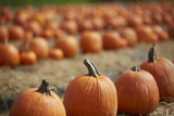 Fall Halloween Pumpkin Patch Photographic Print by Dana Hoff