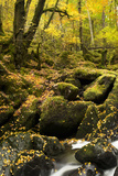 Autumn Woods Photographic Print by Jeremy Walker