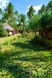Garden on Bora Bora Photographic Print by Daniel Garcia Toro