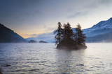 Larch Trees on Island in Lake Sils, Engadin, Switzerland Photographic Print by F. Lukasseck