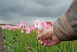Picking Flowers in Spring Photographic Print by Jan Marijs