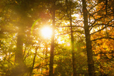 Usa, Maine, Camden, Sun Shining through Tree Branches Photographic Print by Tetra Images