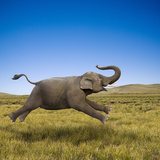 An Elephant Galloping in Freedom and Joy Photographic Print by John Lund