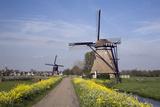 Dutch Windmills along a Flower-Lined Road Fotografie-Druck von Roel Meijer