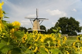Windmill in Holland Photographic Print by  Ivonnewierink