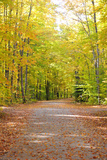 Fall Colosr in Hiawatha National Forest Photographic Print by Dennis Macdonald
