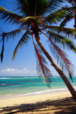 Tropical Beach with Beautiful Palms and White Sand Photographic Print by  pashapixel