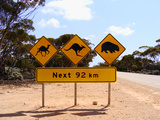 Nullarbor Desert Road Signs Photographic Print by Elena Martinello